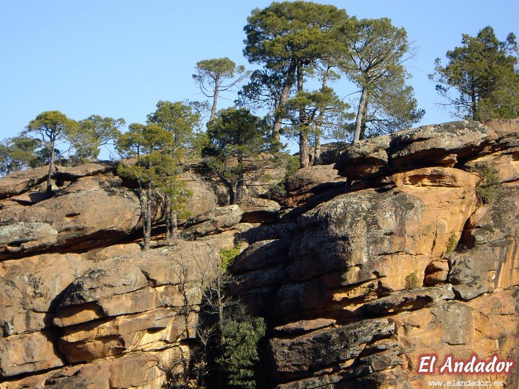 Piedras y pinos del Rodeno