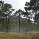 #Magia post-tormenta en los #PinaresDeRondeno