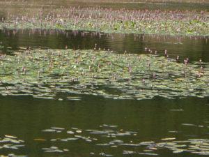 Lagunas como la de Bezas
