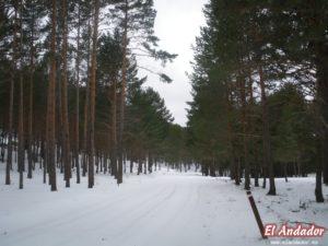 Pinos nevados - ANDADOR VISITAS GUIADAS