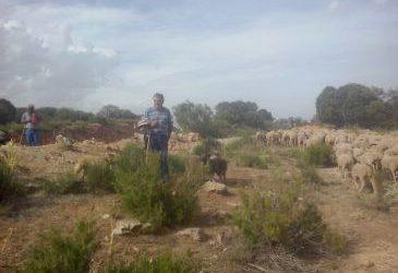 Noticia Diario de Teruel: Los ganaderos que hacen la vereda llegan a Guadalaviar