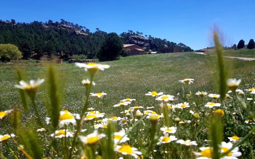 #PaisajesQueEnamoran #SierraDeAlbarracín #MasadaDeLigros #Primavera
