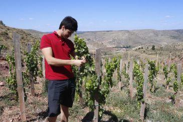 Noticia Diario de Teruel: La viticultura extrema de la alta montaña vuelve a reintroducirse en la Sierra de Albarracín