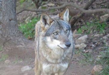 Noticia Diario de Teruel: El parque de la fauna ibérica La Maleza de Tramacastilla se inaugura el día 28