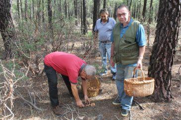 Noticia Diario de Teruel: La Comunidad de Albarracín cierra el parque micológico y el Maestrazgo lo hará esta semana
