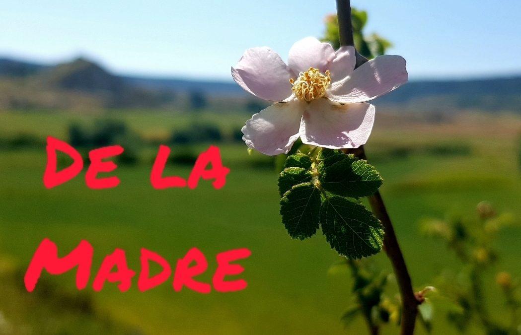 FELIZ DIA DE LA MADRE de parte de ANDADOR VISITAS GUIADAS