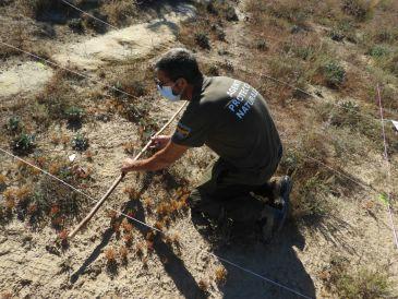 Noticia Diario de Teruel: Los últimos ejemplares de flora endémica intentan sobrevivir en la provincia