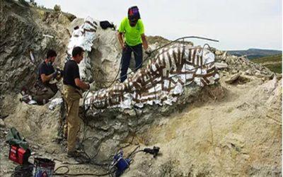 Noticia ElMundo.es: Encuentran en Teruel la columna vertebral de un dinosaurio de más de 25 metros